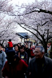 兼六園と桜とたくさんの観光客の皆様