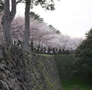石垣と桜を楽しめる